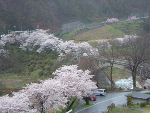 Sakurasakadobashi150405